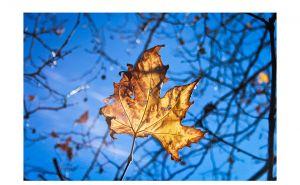 CWP-AutumnLeaves-01.jpg
