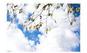 CWP-AutumnLeaves-02.jpg